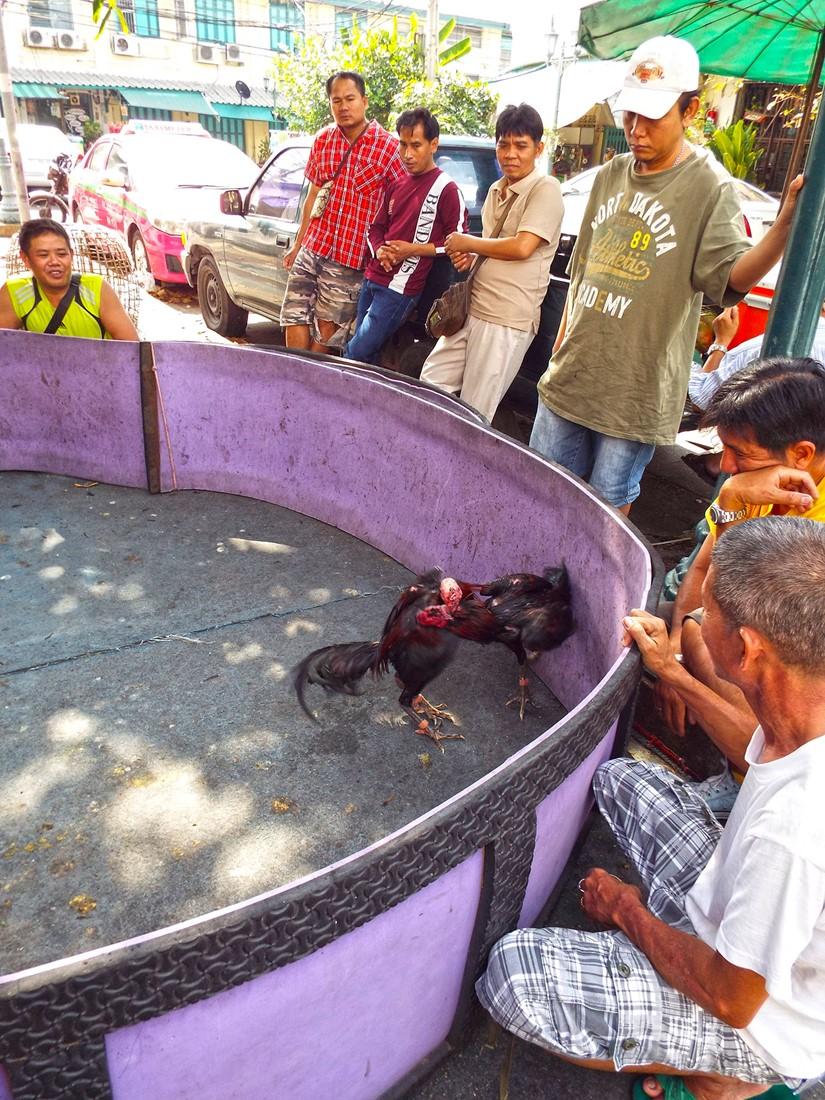 bangkok cock-fighting